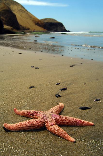 Playa Puerto Supe - Barranca, Peru